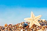 Starfish lying on the sand beach.