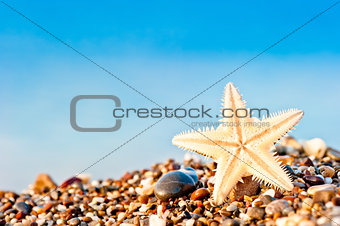 Starfish lying on the sand beach.