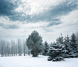 Winter Landscape with Snowy Park