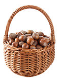 hazelnuts in basket isolated
