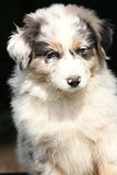 Amazing puppy in frot of black background