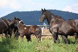 Nice horses on pasturage