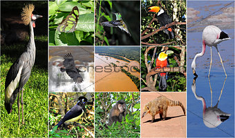 a collage made from Iguazu National park nature pictures.