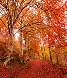 Autumn in the park of Campo dei Fiori, Varese