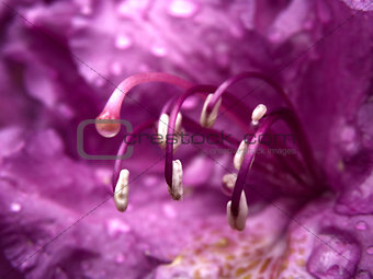 Abstract detail of purple flower