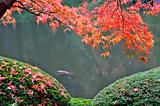 Japanese Gardens 1
