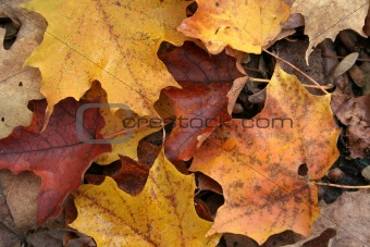 Fall Forest Floor Up Close