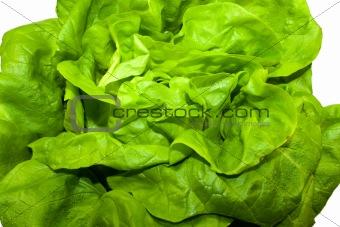 Green fresh lettuce isolated