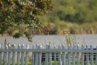 Brazilian Pepper Fence