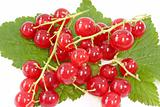 Red Currants on Leaf