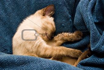Baby Kitten Sleeping