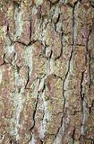 Tree Bark Texture 1