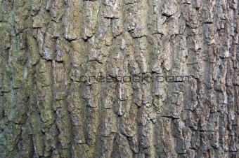 Tree Bark Texture 2