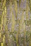 Tree Bark Texture 3