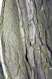 Tree Bark Texture 4