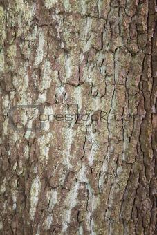 Tree Bark Texture 5