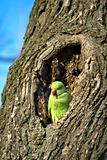 parrot on the tree with park