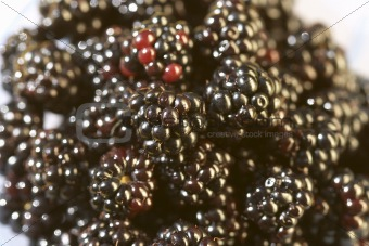 blackberries pattern