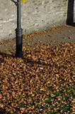Autumn in Phoenix Park, Dublin