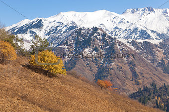 Autumn in Kazakhstan mountains Kok Zhailau