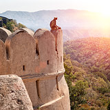 Kumbhalgarh fort, Rajasthan, India
