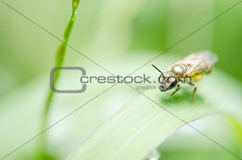 Bee in the nature