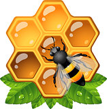 Bee on honeycomb