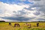 horses and foals on pasture under stormy sky