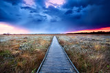 wooden path on swamp at sunset