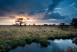 calm sunset over swamps with little pine trees