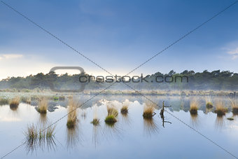 fog over swamp in Drenthe