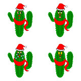 Funny christmas cacti