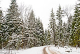 Road in a winter snow-covered wood