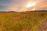 Wild field in central Russia at dawn
