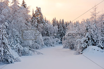Small forest lake in the snow of the snow-covered fir trees