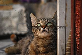 Street cat closeup