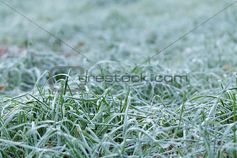 close up photo of frosty morning grass