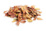 heap of dry leaves. isolated