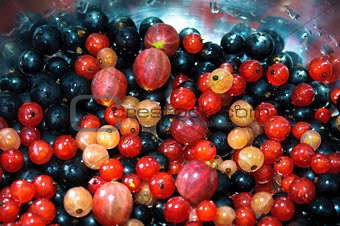 A handful of differentred, white, yellow, black berries