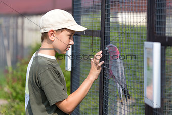 Boy and parrot