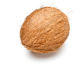 single coconut