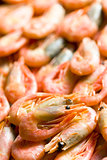 the shrimps
