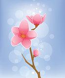 Spring Concept - Cherry Blossom