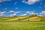 Green agricultural landscape under blue sky