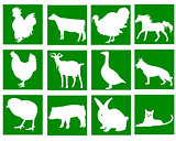 domestic animals in the green squares