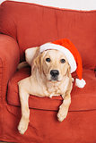 Dog with Christmas hat on armchair
