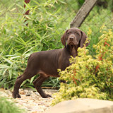 Gorgeous puppy in the garden