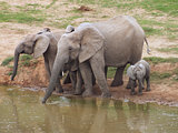 Elephant family at a waterhole