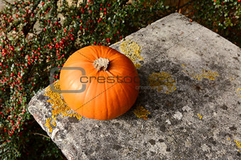 Small orange pumpkin on stone bench with red berries