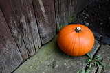 Ripe pumpkin by a weathered door